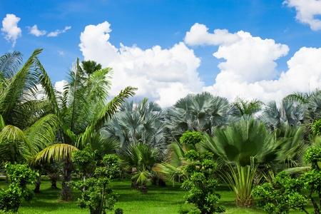 palm garden: Magnificent tranquil landscape