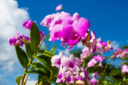 Beautiful orchid on the background of blue sky photo
