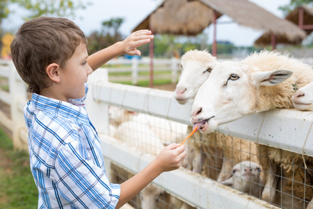 Happy little boy feeding sheep in a park at the day time. Kid having fun otdoors. Concept of good leisure. Imagens - 122396665