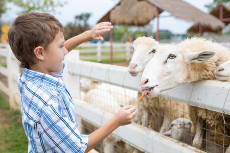 Ragazzino felice che alimenta le pecore in un parco durante il giorno. Bambino che si diverte all'aperto. Concetto di buon tempo libero.