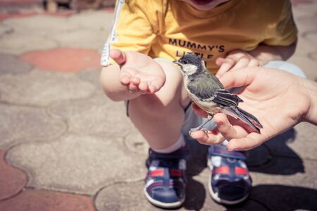 little boy is playing with a chick at the day time. Concept of the rescue. Stockfoto