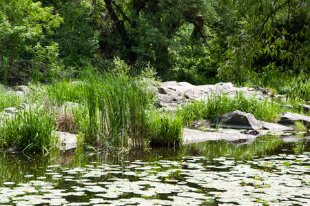 A very good place to be. Pond landscape. Lily pond in summer park. Garden pond on natural landscape. Small lake with marsh plants and lilies. Water garden or natural pool. Pond in summer. Stock Photo