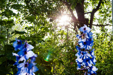 Nature needs your care. Delphinium flower blooming. summer garden. villatic holiday season. morning. larkspur flowerbed. spring bloom. nature environment, ecology. Delphinium flower candle.