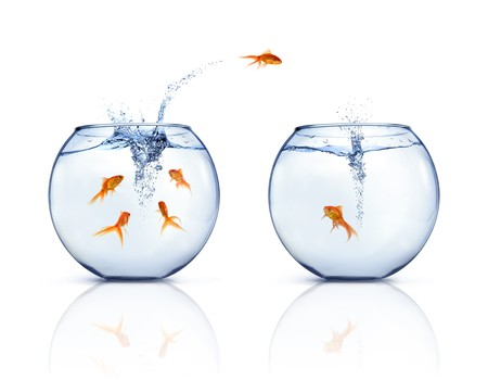 leaping: A goldfishes jumping out of fishbowl to other fishbowl. White background. Stock Photo
