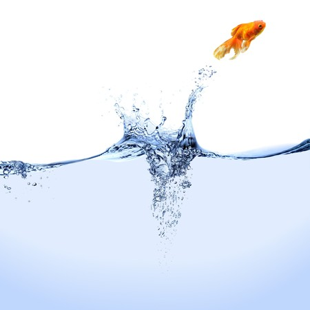 A goldfish jumping out of the water. Stock Photo