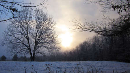 springwater: Several minutes after sunrise over a field in Springwater, NY. There is a light snowfall.