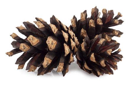 pine three: Three pine cones isolated on white background