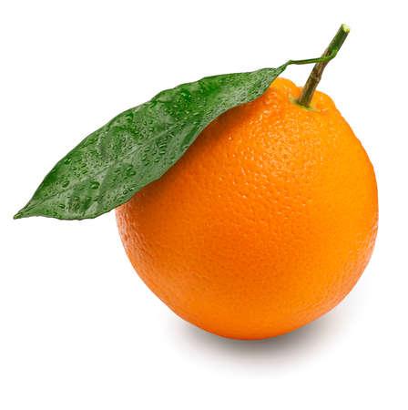 wet leaf: citrus fruit isolated on white background. Orange with wet leaf