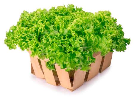 Fresh organic green lettuce in a basket isolated on white background. Vegetable salad lettuce