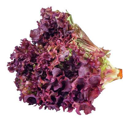 schoof van paars sla isoleren. Verse groente salade Lollo Rosso