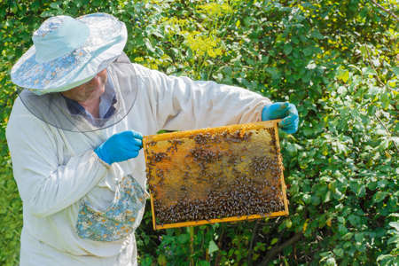 catsuit: beekeeper holding a honeycomb full of bees. Beekeeper man working with a frame full of bees. Beekeeper keeps frame with honeycomb. Beekeeper in protective workwear inspecting honeycomb frame at apiary