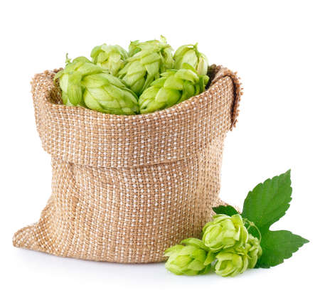 near beer: Fresh green hops in burlap bag with branch near isolated on white background. Hop cones isolated on white. Hop for beer in burlap bag. Sack of fresh hops isolated on a white background.