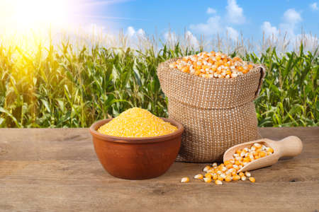 Droge ongekookte maïs korrels in jutezak en maïs grutten in kom op houten tafel met maïs veld met zon op de achtergrond. Landbouw en oogst begrip. Maïs met maïs veld achtergrond