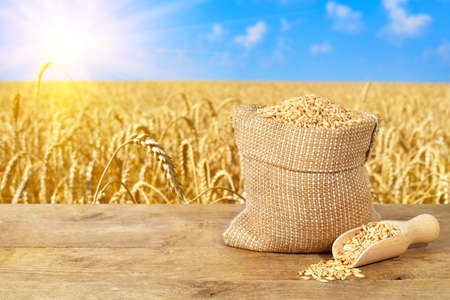 wheat grains in sack on nature background