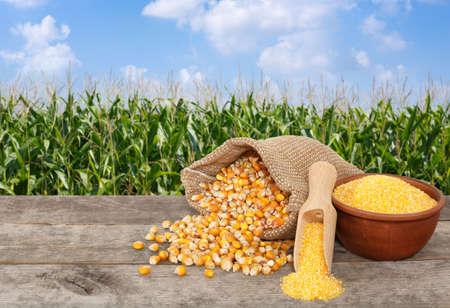 corn seeds and cornmeal on table Stock Photo