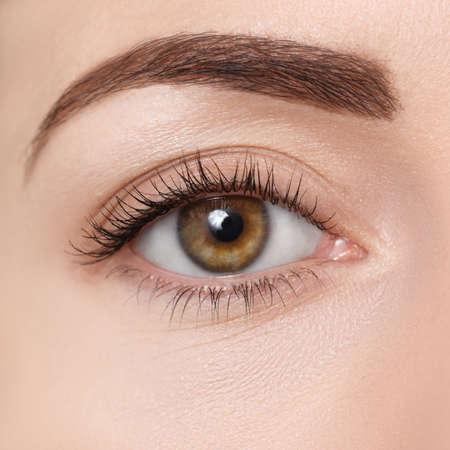 茶色の目のクローズ アップ