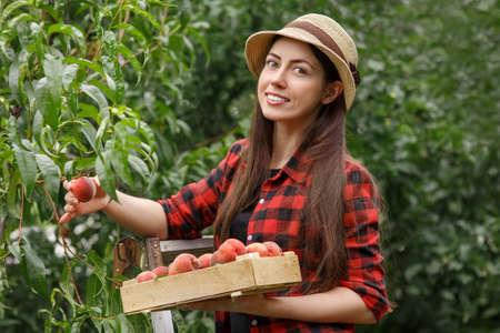 Vrouw die perziken oogst