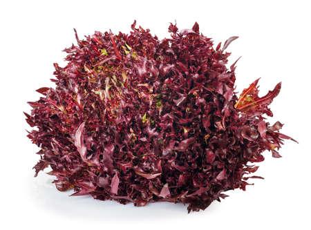 escarola: lechuga roja aislada en el fondo blanco. Ensalada de verduras frescas lollo rosso. Endro crujiente