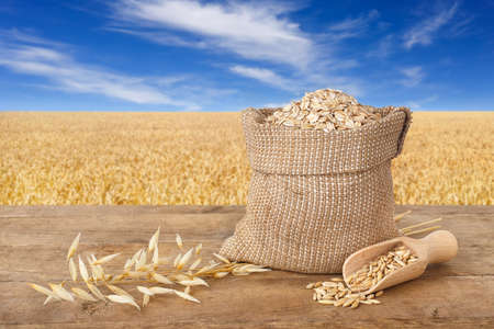 oat flakes in bag, scoop with oat grains, ears of oats on wooden table with field on the background. Ripe field, blue sky with beautiful clouds. Uncooked porridge