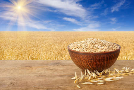 ears of oats and oat grains in bowl Stock Photo