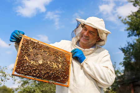 beekeeper with honeycomb in the apiary Stock Photo
