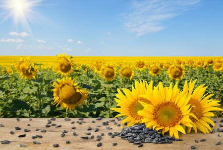 heap of sunflower seeds