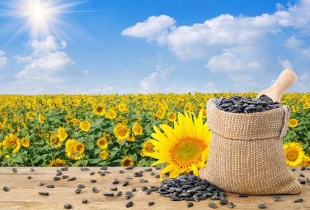 sunflower seeds and field