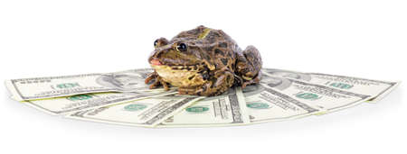 big frog on the heap of dollars isolated on white background