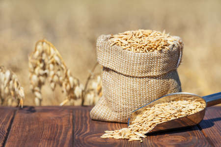 oat grains in bag and scoop on table with ripe cereal field on the background. Agriculture and harvest concept
