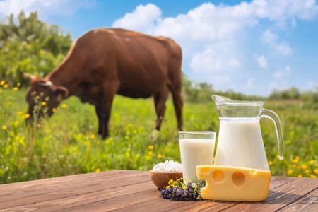 milk in glass jug and different dairy products on wooden table with grazing cow on the meadow as background