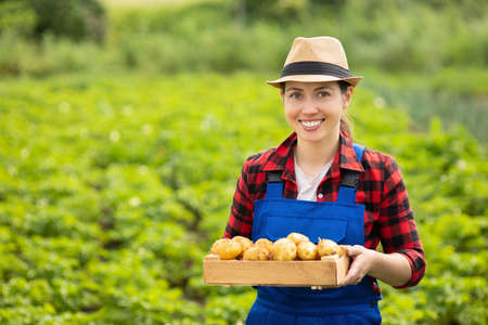 woman gardener with potatoes in box