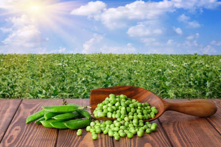 green peas in scoop on wooden table against the sunshine agricultural field