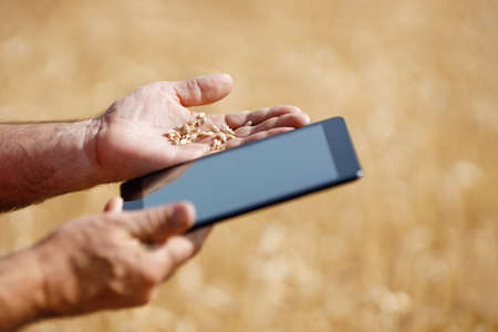 electronic tablet in a wheat field