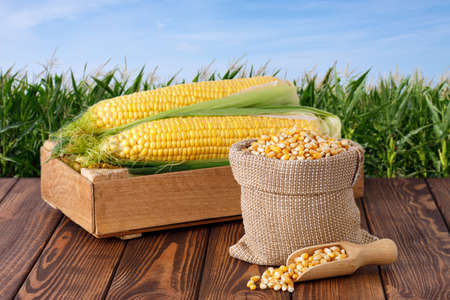 corn cobs in box and dry corns in bag