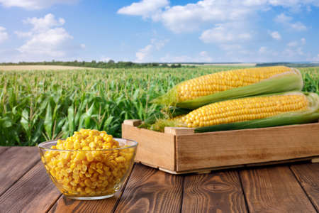 corn cobs and canned seeds in glass bowl Archivio Fotografico