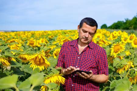 Agronomist in sunflower field