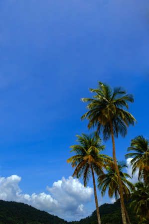 Tropical climate - Palm tree and blue sky  Trinidad photo
