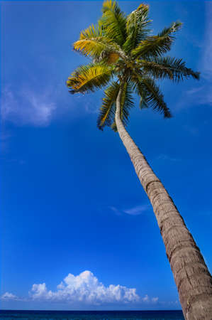 Tropical climate  Palm tree sea and blue sky photo