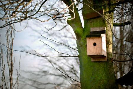 maison oiseau: Maison oiseau sur un arbre