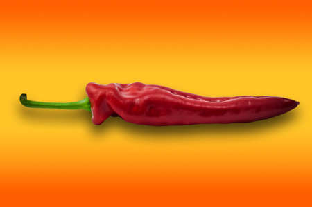 included: Single one red paprika sweet pepper on orange background with clipping path included for easy clean extraction