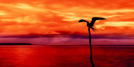 seabird: Panoramic view of sea and sky and a seabird silhouette Trinidad and Tobago at dusk Stock Photo