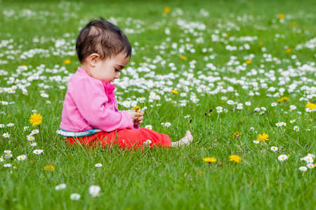 curiously: Cute chubby toddler looking at a daisy flower curiously exploring nature outdoors in the park