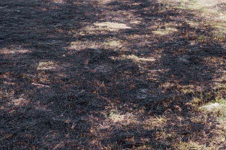 quemado: Ceniza quemada hierba de carbono CO2 tierra seca
