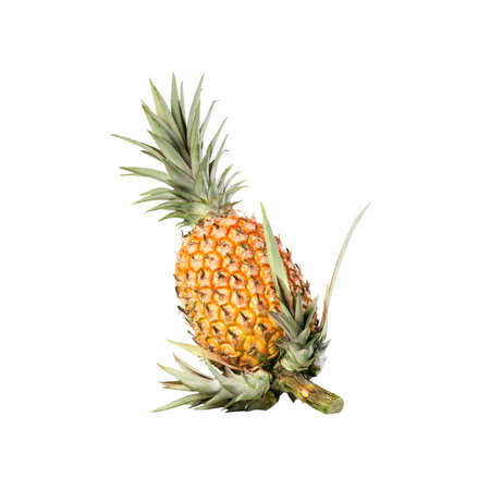 Pineapple whole organic white background with new shoots on stem, clipping cut out Banco de Imagens