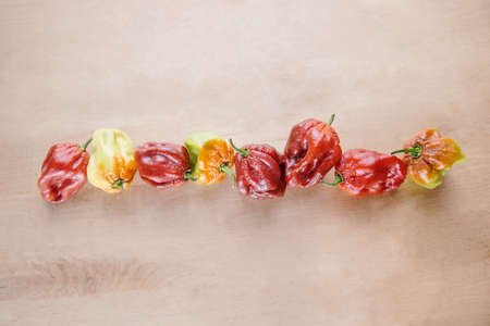 Red Hot Chilli pepper Scotch Bonnet Caribbean Antillais on wooden background colourful in a row Stock Photo