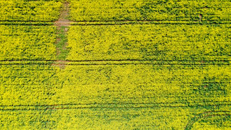 Aerial photo of a rapeseed field, France 스톡 콘텐츠