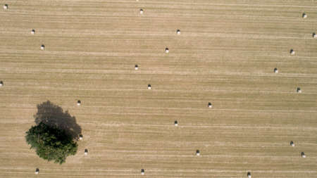 Aerial shot of round bales of straw in the meadow