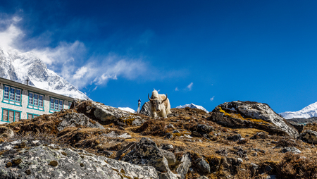 Yak on Himalayan mountain trek to Everest base camp Stock fotó - 91626324