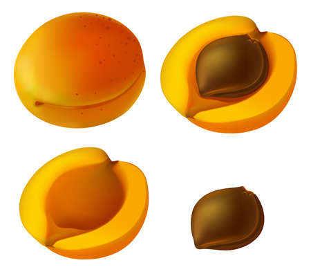 apricot: Apricot elements. Apricot fruit, whole and cut into slices Illustration
