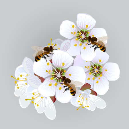 creep: Apricot flowers with bees. Decorative panel with a blossoming branch of an apricot